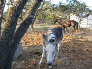 My donkey keeping Benita company